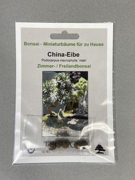 China-Eibe, Podocarpus macrophylla maki, Zimmerbonsai /Freilandbonsai, Geschenkidee, Bonsai - Samen