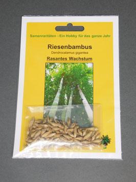 Riesenbambus / Dendracalamus gigantea, Geschenkidee, Seltene Samen, Besonderheit, Rarität