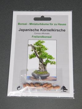 Samen+Anzuchtset: Japanische Kornelkirsche / Cornus officinalis, Freilandbonsai, Geschenkidee, Bonsai-Samen