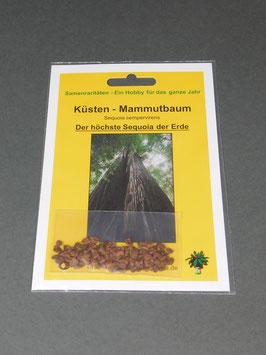 Küsten-Mammutbaum, Sequoia sempervirens, Geschenkidee, Seltene Samen, Besonderheit, Rarität