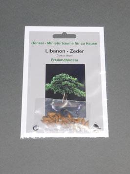 Libanon Zeder, Cedrus libani, Freilandbonsai, Geschenkidee, Bonsai - Samen im Geschenkkarton