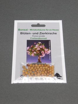 Samen+Anzuchtset: Blüten- und Zierkirsche, Prunus serulata, Freilandbonsai, Geschenkidee, Bonsai-Samen