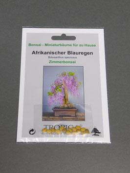 Samen+Anzuchtset: Afrikanischer Blauregen, Bolusanthus speciosus, Zimmerbonsai, Geschenkidee, Bonsai - Samen