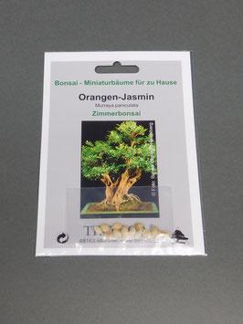 Orangen-Jasmin, Murraya paniculata, Zimmerbonsai, Geschenkidee, Bonsai-Samen