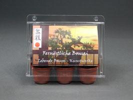 Fernöstliche Bonsai, Geschenkidee, Mini-Gewächshaus mit Bonsai - Samen