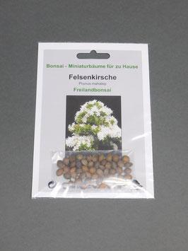 Samen+Anzuchtset: Felsenkirsche, Prunus mahaleb, Freilandbonsai, Geschenkidee, Bonsai - Samen