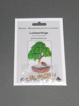 Lorbeerfeige, Ficus microcarpa, Zimmerbonsai, Geschenkidee, Bonsai - Samen im Geschenkkarton