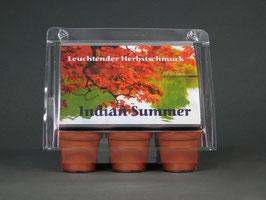 Indian Summer, Geschenkidee, Mini-Gewächshaus mit Bonsai - Samen