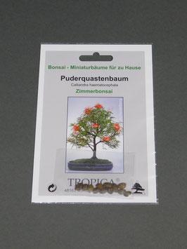 Puderquastenbaum, Calliandra haematocephala, Zimmerbonsai, Geschenkidee, Bonsai-Samen