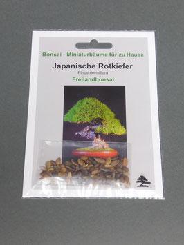 Samen+Anzuchtset: Japanische Rotkiefer, Pinus densiflora, Freilandbonsai, Geschenkidee, Bonsai-Samen