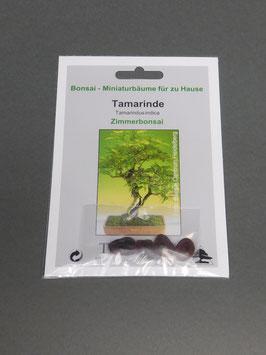 Samen+Anzuchtset: Tamarinde, Tamarindus indica, Zimmerbonsai, Geschenkidee, Bonsai-Samen