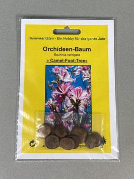 Orchideenbaum / Bauhinia variegata, Geschenkidee, Seltene Samen, Besonderheit, Rarität