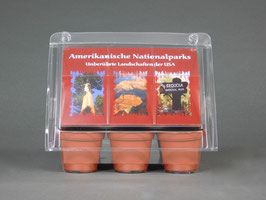 American National Parks, Geschenkidee, Mini-Gewächshaus mit Bonsai - Samen