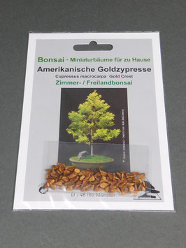 Amerikanische Goldzypresse, Cupressus macrocarpa `Gold Crest `, Zimmerbonsai / Freilandbonsai, Geschenkidee, Bonsai - Samen