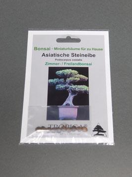 Samen+Anzuchtset: Asiatische Steineibe, Podocarpus costalis, Zimmerbonsai /Freilandbonsai, Geschenkidee, Bonsai-Samen