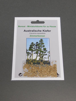 Samen+Anzuchtset: Australische Kiefer, Casuarina equisetifolia, Zimmerbonsai, Geschenkidee, Bonsai - Samen