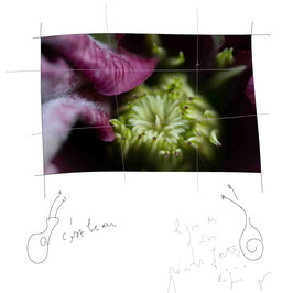 Atelier 'la photo, la nature et ma nature'