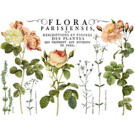 "IOD Decor Transfers ""Flora Parisiensis"""