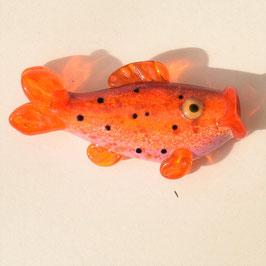 Rundbogenfisch