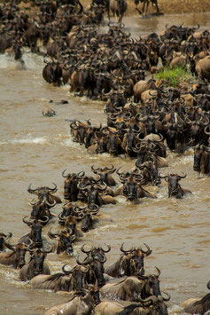 4 nights / 5 days Tanzania Lodge Safari ( Wildlife )