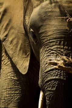 3 nights / 4 days with African Safari Lodge