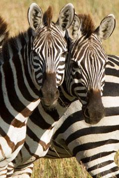 5 nights/ 6 days Tanzania Lodge Safari ( Serena Lodge)