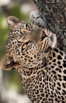 5 days / 6 nights Tanzania Lodge Safari ( Wildlife)