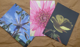 Postkarteset: 3 Postkarten Blüten