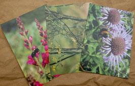Postkartenset: 3 Postkarten Blüten und Insekten
