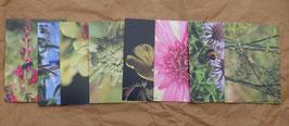 Postkartenset: 8 Postkarten Blüten und Insekten
