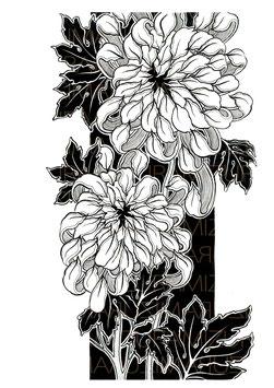 Illustration limitée encadrée : Chrysant