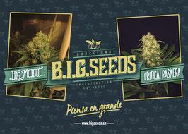 Poster BIG Seeds 2015