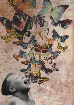 Collage 22-15 -Schmetterlinge