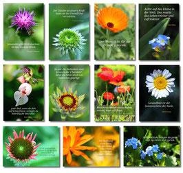 Meditationskarten Bp0014