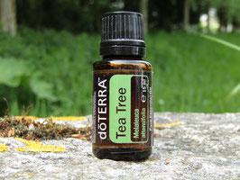 Tea Tree  (Melaleuca)