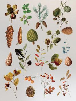 Stickers de plantes et fleurs en sachet