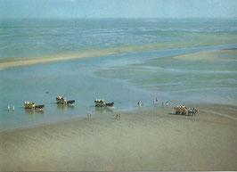 Ansichtskarte - Cuxhaven - Wattwagen