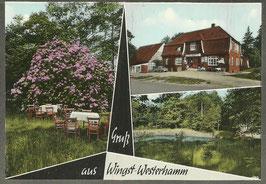 Ansichtskarte - Wingst - Westerhamm