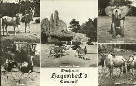 Ansichtskarte - Hamburg Hagenbeck