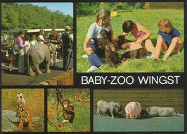 Ansichtskarte - Wingst - Babyzoo