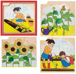 Wachstumspuzzle, vier Lagen Sonnenblumen