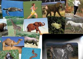 Das Innenleben der Tiere
