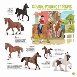 Pferde, Fohlen und Ponys A