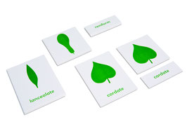 Botany Cabinet: Nomenclature Cards (ENGLISCHE VERSION)