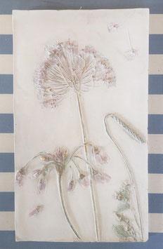 Botanic Art Allium