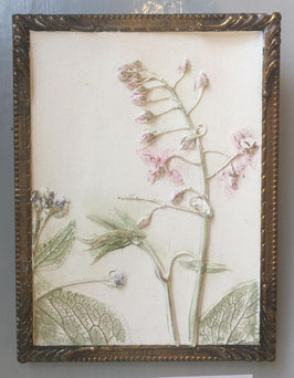 Botanic Art Rosa Antik