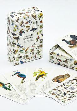Vogel Quartett mit Vogelstimmen