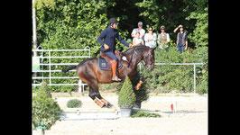 Working Equitation mit Mihai Maldea am 09. und 10. Mai 2020 - !!!NEUER TERMIN!!!
