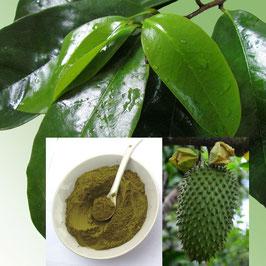 Graviola reines Blatt Pulver  100 % naturein  Rohkost Premium Qualität  aus dem  Amazonas