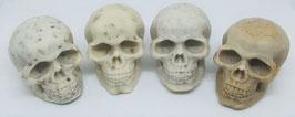 Grandes têtes de morts